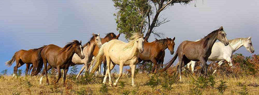 heart-and-stone-ponies-horses-370